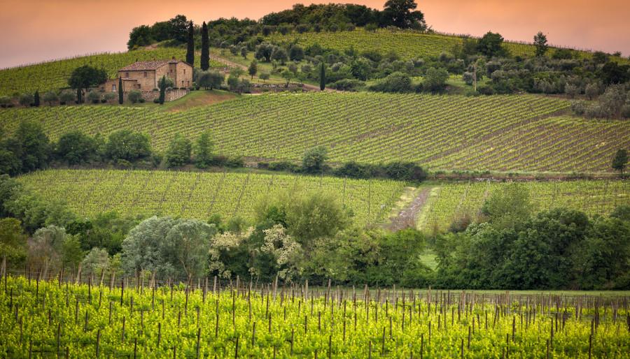 Вино без добавени сулфити